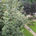 jardins 27 grenelle